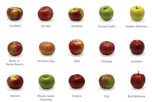 Now, I know I'm colorblind, but still, they all look like apples to me.