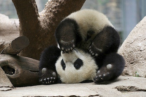 Okay, this little guy is so adorable that I think it deserves the excessive traffic. SO CUTE!!!